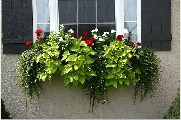 beautiful window box  u2665