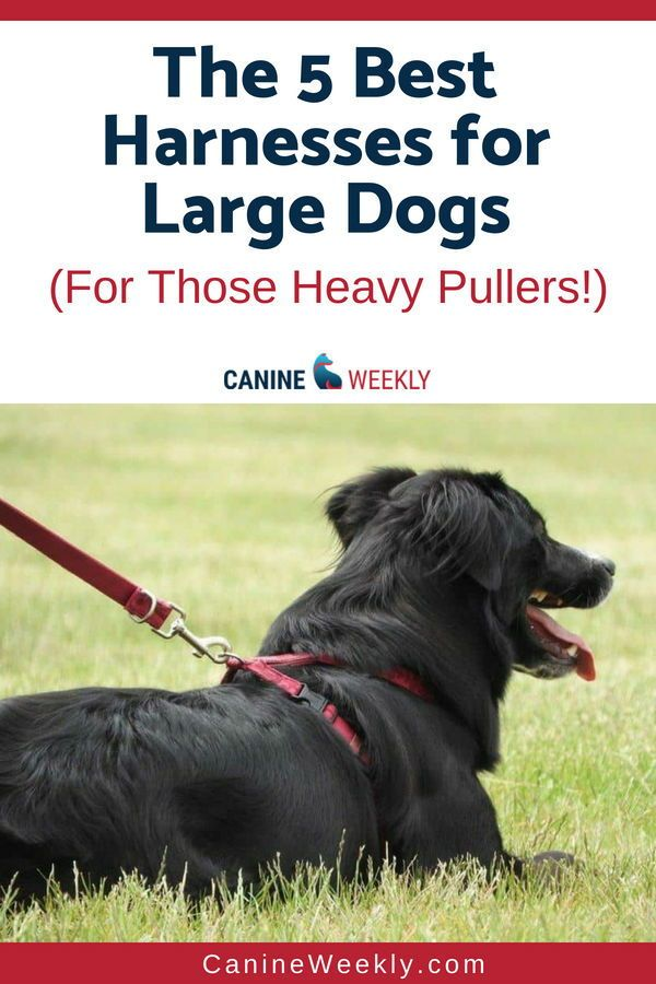 5 Best Large Dog Harnesses To Stop Pulling 2020 Reviews Dogs