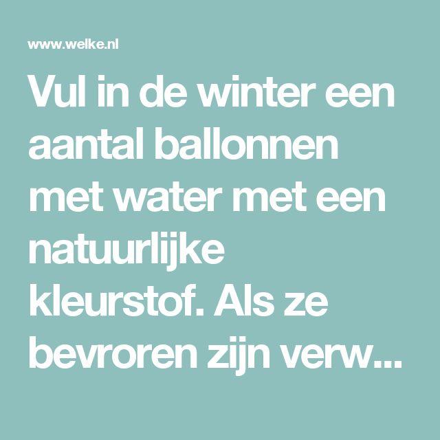 Vul in de winter een aantal ballonnen met water met een natuurlijke kleurstof. Als ze bevroren zijn verwijder de ballon en het lijkt of je reuzeknikkers in je tuin hebt liggen. Foto geplaatst door driesmoeltje op Welke.nl