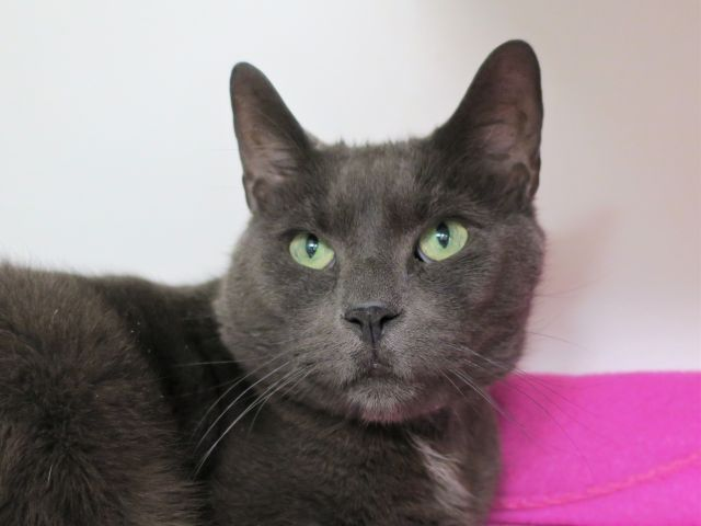Urgent Darla 24596 Watch Her Video 8 Year Old Darla And Housemate Dory Were Abandoned By Their Owner At The Shelter Darl Kitten Care Newborn Kittens Cat Care