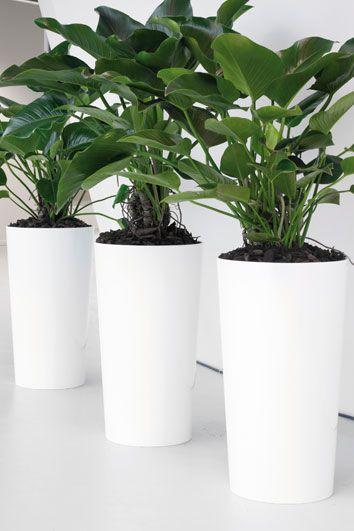 losse-potten-met-planten.jpg (354×531)