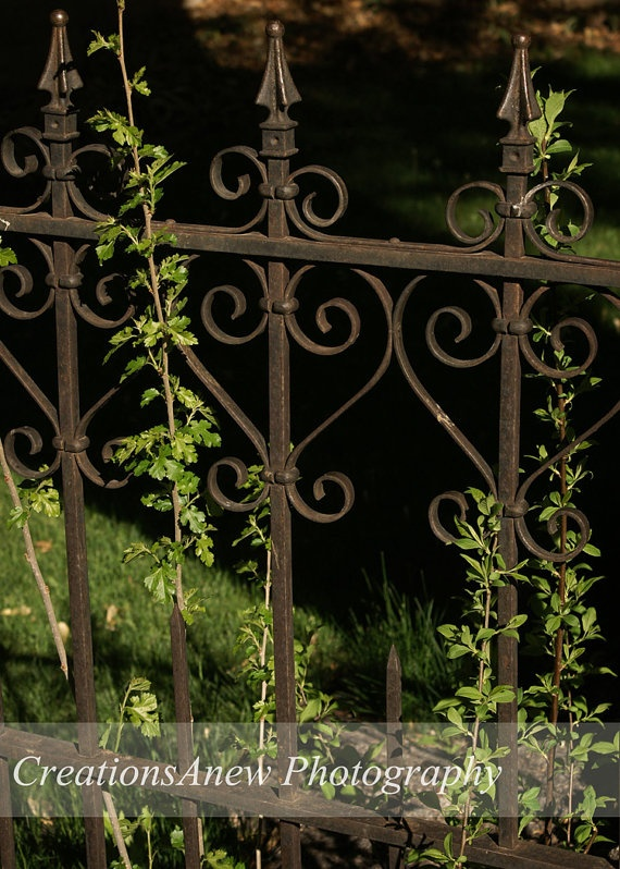 5x7 Photography Decorative Wrought Iron Gate with by CreationsAnew, $17.00