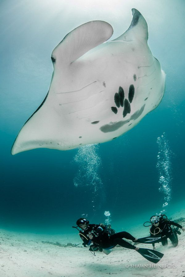 Sarah Lewis and Carla Kerstan dive with a manta ray off the coast of Indonesia (© Shawn Heinrichs) - Conservation.org