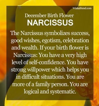December Birth Flower : Narcissus. I've never seen this before...but it's pretty accurate!