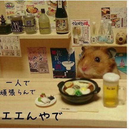 【モフモフ注意!】可愛すぎる居酒屋店員 ハムスター銀次 Hamster Ginji's Izakaya