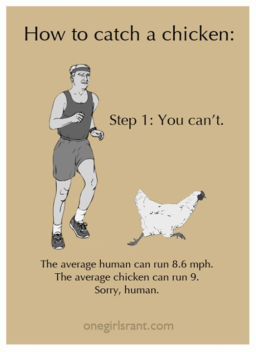 I disagree.... even this chunky lady can catch a chicken. (Takes a while.... but…