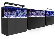 Red Sea REEFER™- Rimless Reef Ready Systems for advanced hobbyists. Red Sea's REEFER series of Reef Systems, provide advanced hobbyists with a solid foundation for building a fully featured reef or marine aquarium.