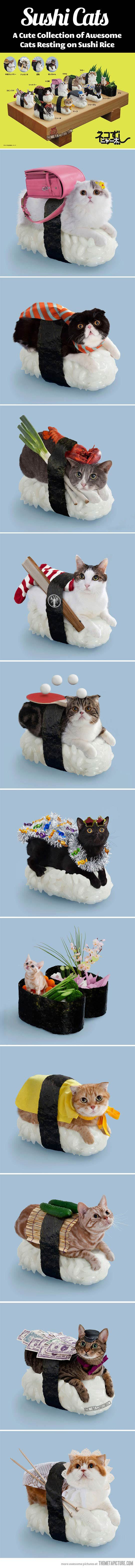 Sushi Cats… Some people have waaaay too much time on their hands.  But did it make me laugh : )  Yep