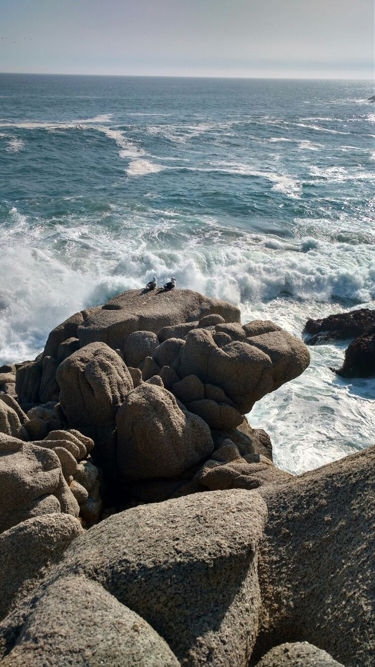Ola y gaviotas de con-con; Viña del mar. Chile.