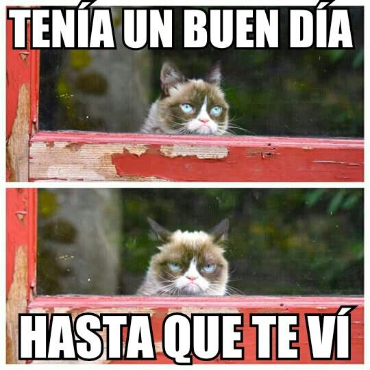 Grumpy cat, even in another language it's funny!