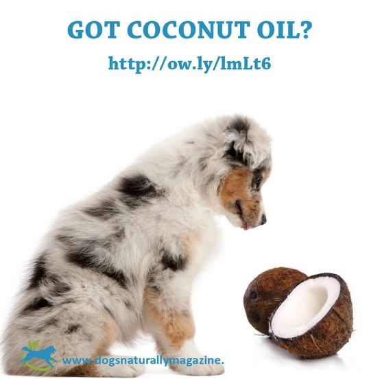 17 Best Images About Skinny Coconut Oil For Healthy Pets