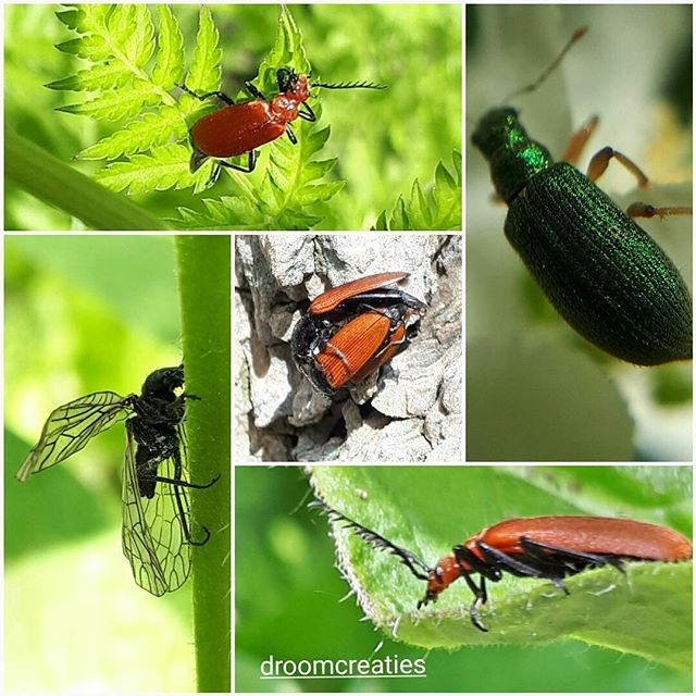 Macro photos of tiny insects, with special colors    #macro #macrophoto #insects #colors #droomcreaties