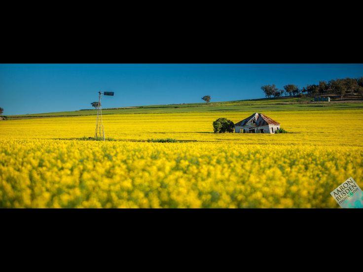 Canola fields. Copyright Aaron Rusden Photography