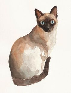 Siamese cat watercolor painting by Sheila Gill | Would make good ...