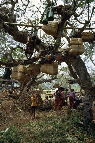 1051444. Offerings of roast pig and baskets of fruit hang from frangipani tree. at bukit gumang hill, bugbug