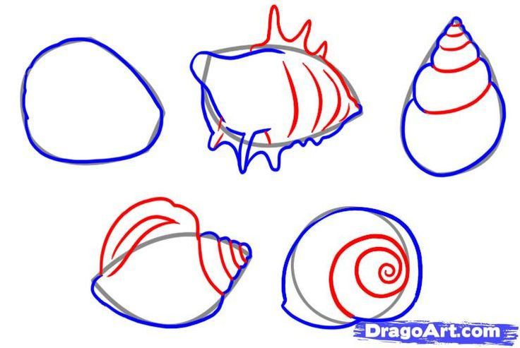 how to draw shells