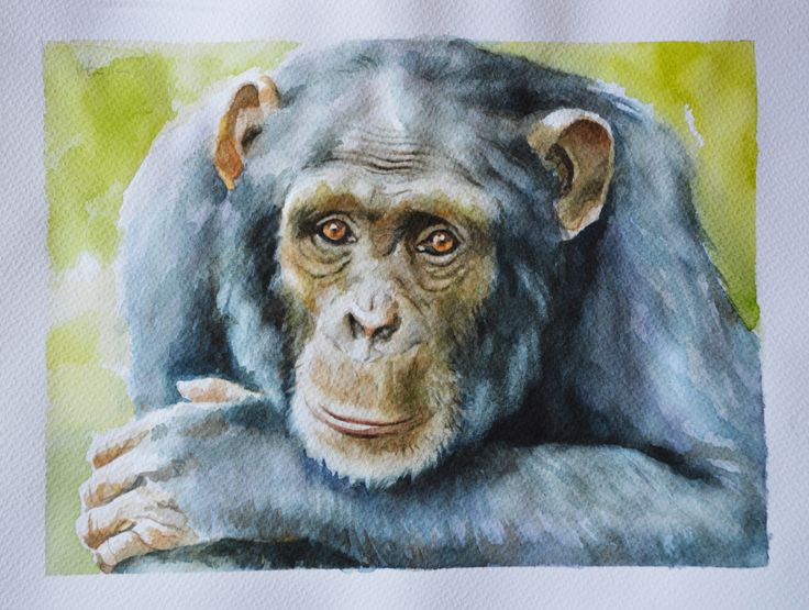 Watercolour on paper 30x40 cm