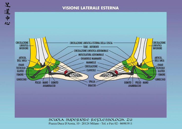mappa_riflessologia_visione_laterale_esterna.jpg (842×595)