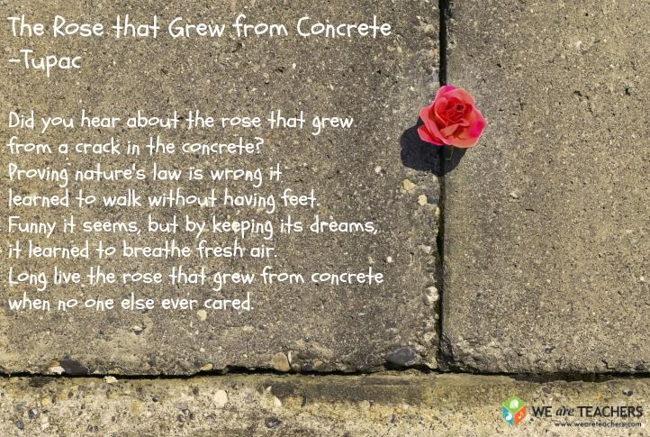 rose concrete poem 24 Must Share Poems for MS and HS
