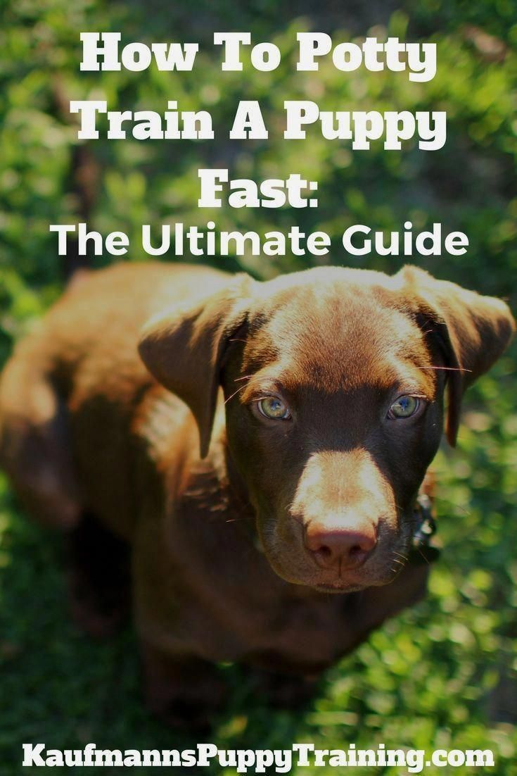 Get Free Tips Ideas And Guide For Dog Training For Obedience Be