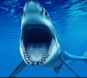 Shark Week : Discovery Channel I love Shark Week!