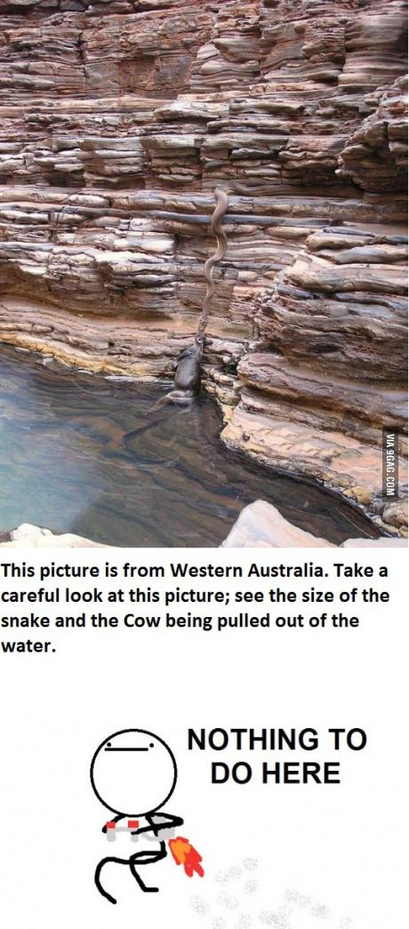 9GAG - Meanwhile in Australia