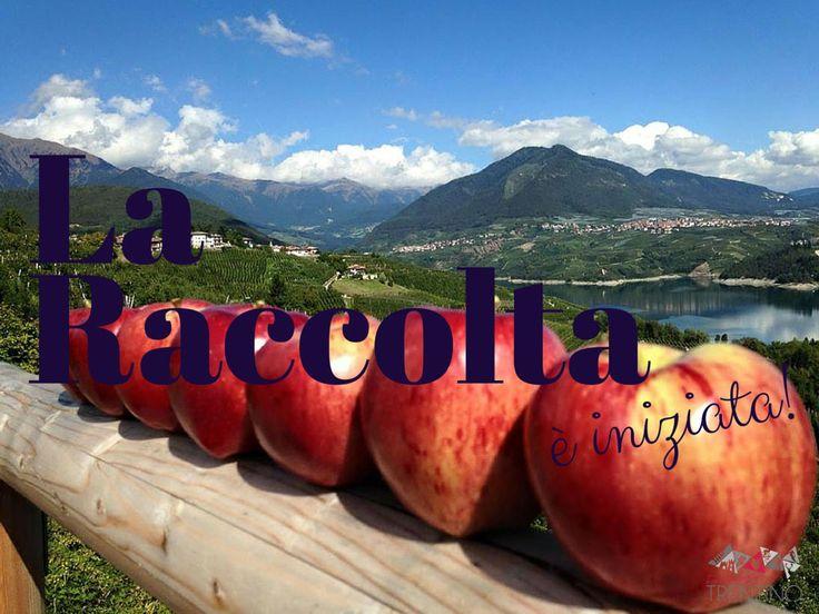 La conidura, la raccolta delle Mele Melinda, è iniziata! Scopri tutto sul raccolto delle mele e festeggia con noi a Pomaria, la Festa del Raccolto!