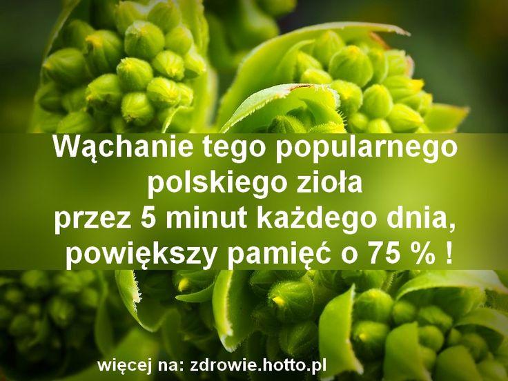 To niewiarygodne i zdrowe zioło, było używane w tradycyjnej medycynie od wieków. Do dziś jest bardzo popularne w Polsce i wielu krajach. To wspaniały dar