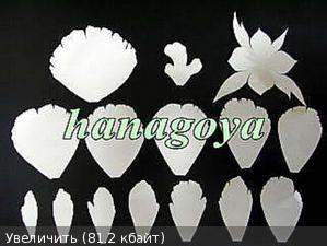 ПИОН С ЯПОНСКОГО САЙТА http://flower.blogmura.com/artflower/