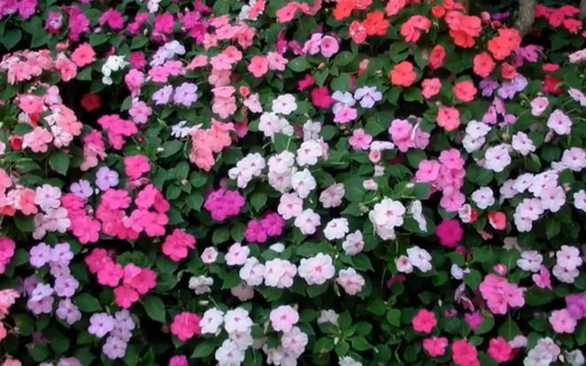 25 Full Shade Plants that Will Look Great in Your Yard - Do you have a shaded area where nothing seems to grow? Adding a pop of color to dark areas is easier than you think. Here is a list of 25 full shade plants that will look great in your yard.