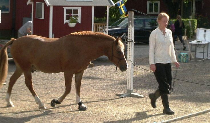 Hästbaserad ledarskapsutveckling PROVA PÅ WORKSHOPS 15 juni 2014 zoraya.se