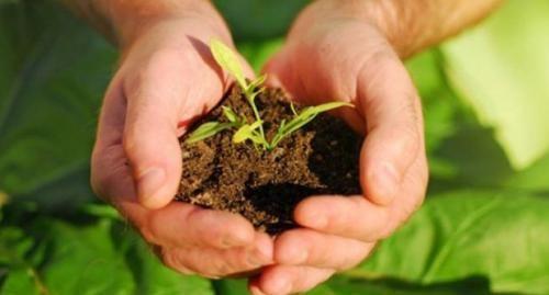 """อีกหนึ่งวันสำคัญ !! 21 ตุลาคมของทุกปี """"วันรักต้นไม้ประจำปีของชาติ""""   สำนักข่าวทีนิวส์"""