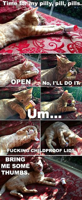Bring me some thumbs!: Pills Bottle, Funny Cats, Hunters Kitty, Cat Pills, Bahaha, Lol Cats, Thebloggesscom, Aunt, Animal