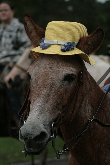 84 Best Images About Mules On Pinterest Terre Haute Indiana Image Search And Donkeys