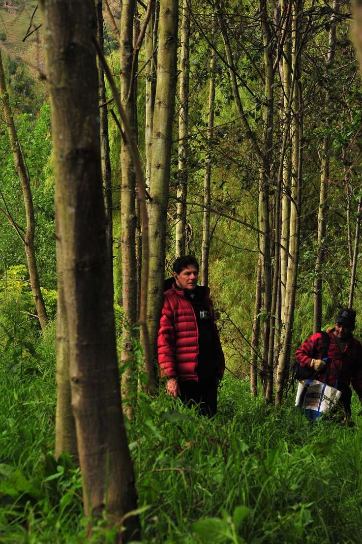 Estamos haciendo un gran esfuerzo y contamos contigo para sembrar 18 mil árboles en la Cuenca Alta del Río Bogotá #AdoptaUnArbol