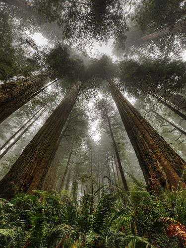 Images about redwoods carvings on pinterest the