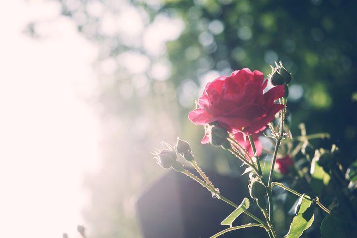 아침에 피는 꽃