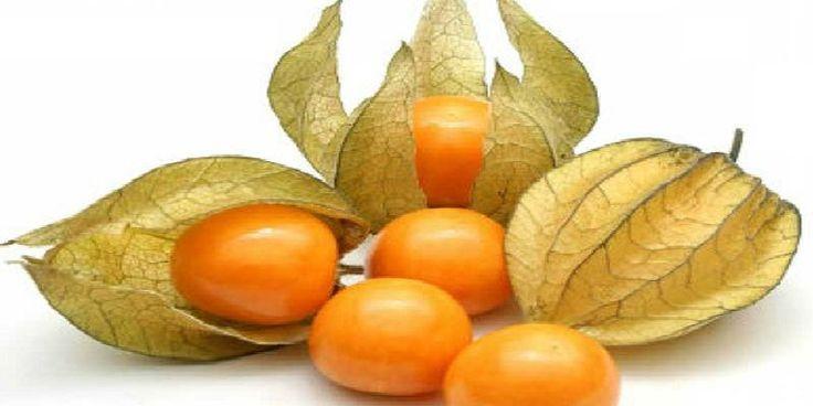 Złote jagody są to małe owoce, o okrągłym kształcie i bardzo słodkim smaku. Mają barwę żółtą i są otoczone w powłoczkę, która wygląda jak kokonu papieru.          Poznajten wspaniały owoc i jego zalety  Złote jagody są bardzo charakterystyczne