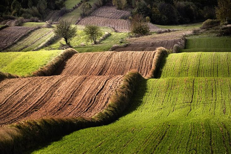 fields on hills shaped like waves are typical for Roztocze