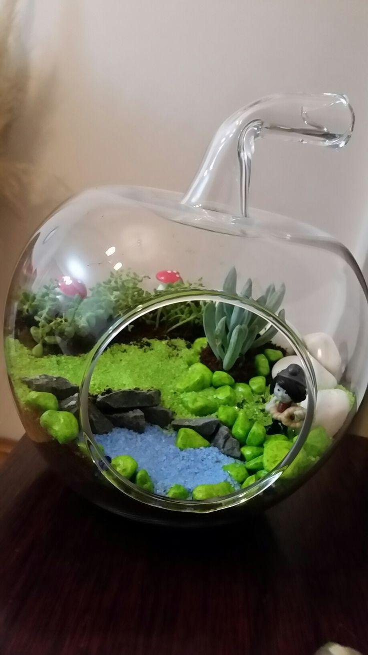 My terrarium teras