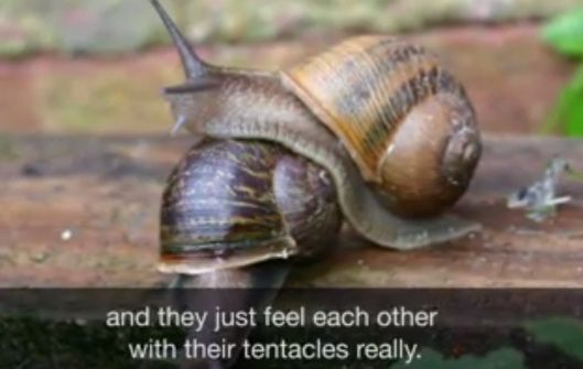 Need some good news today? A mutant snail just found love via Twitter