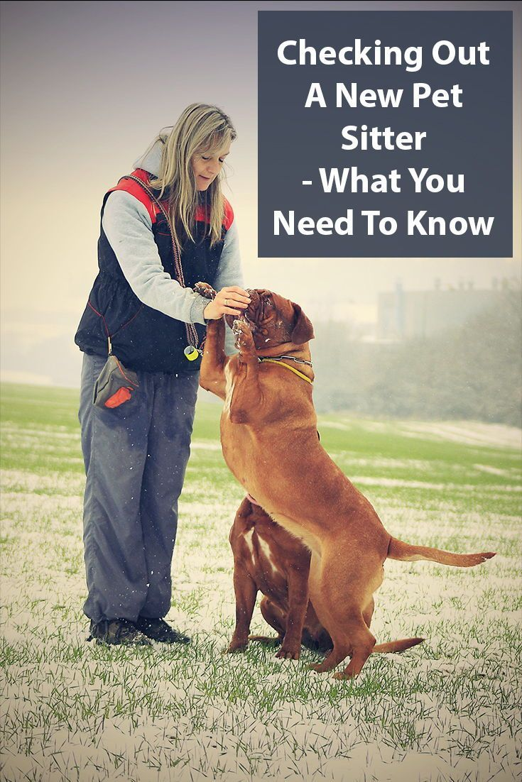 How To Check Out A New Pet Sitter Pet Sitters Dog Walking Business Pets