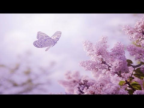 Relaxing Piano Music: Romantic Music, Peaceful Music, Soothing Sleep Music, Relaxing Music ★89 - YouTube