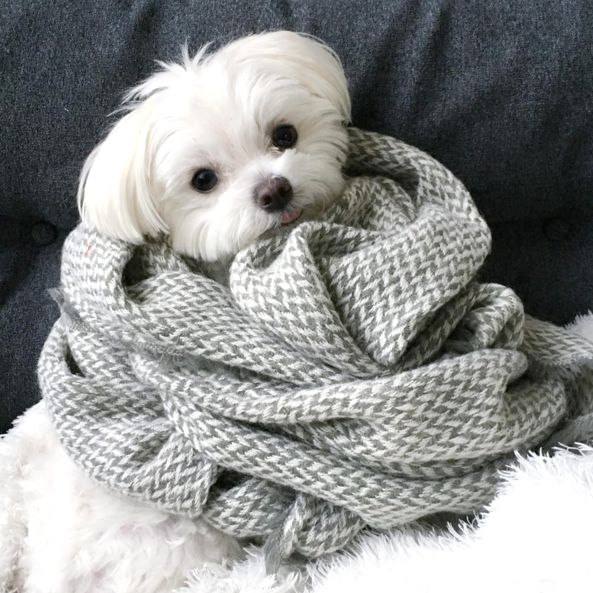 All bundled up...  Reminds me so much of Hansel--miss that little buddy