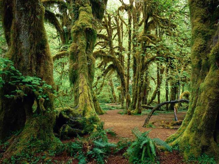 The Enchanting Forests Of Olympic National Park