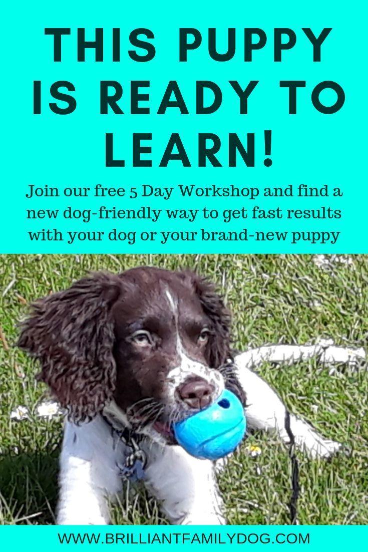 The Brilliant Family Dog Workshop S Nearly Here Dog Training Dog Training Books Dogs
