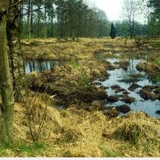 Ja, ze bestaan nog, óók in ons kleine, dichtbevolkte land: uitgestrekte heidevelden zoals het #Dwingelderveld. Honderd jaar geleden was bijna heel Drenthe één grote heidevlakte. Dat is geweest, maar zoek je de grote, stille #heide, dan ben je op het Dwingelderveld aan het goede adres. Routes op http://www.staatsbosbeheer.nl/Natuurgebieden/Dwingelderveld.aspx?tab=Activiteiten