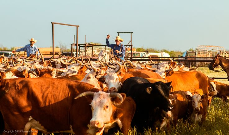 #DidYouKnow at one time, the Waggoner Ranch spanned more than a million acres. #texashistory   Photography by Jeremy Enlow