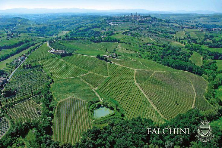 Azienda Agricola Casale Falchini, #Laudemio producer in San Gimignano, Siena, #Tuscany