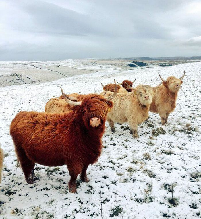 These Cows Look Like They're About To Drop The Hottest Indie Rock Album Of The Year